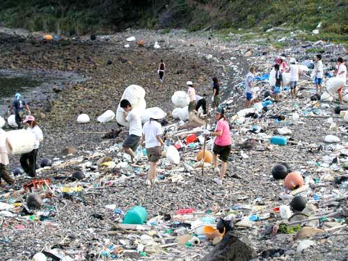高知 海洋ゴミ 海洋生物