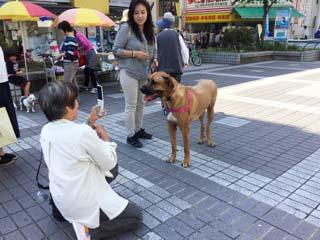 高知県南国市 斉藤牧場 土佐犬 ニーナ